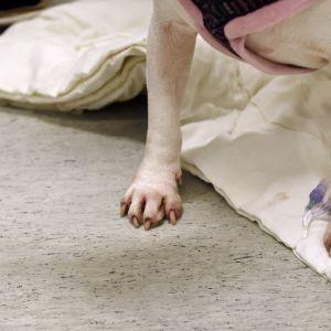 Koiraa hoidetaan Viikin pieneläinklinikalla.