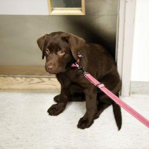 Koiranpentu Viikin pieneläinklinikalla.
