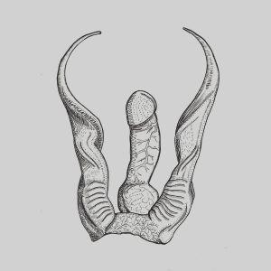 Illustration av en kuk och abstrakta ben.