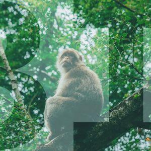"""apina istuu oksalla, päällä teksti """"BI"""""""