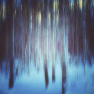 Synkkä metsä, hämärä