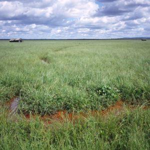 Näätävuoma-Sotkavuoma soidensuojelualuetta ennallistetaan parhaillaan Kittilässä.