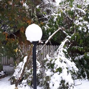 Lumen painosta katkennut syreeni.