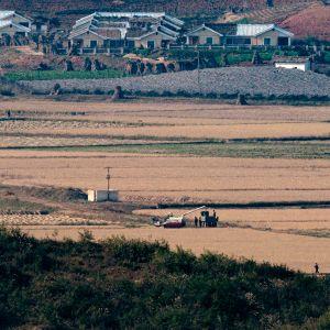 Riisinkeruuta Pohjois-Koreassa.