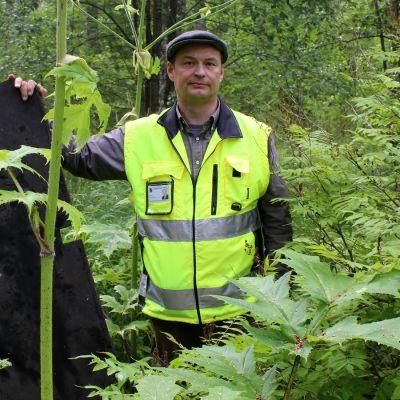 Kontiolahden kunnan ympäristönsuojelusihteeri Antti Suontama jättiputkien keskellä.