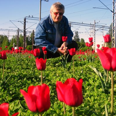 Tero Westerlund ihastelee punaisia tulppaaneja täynnä olevaa peltoa