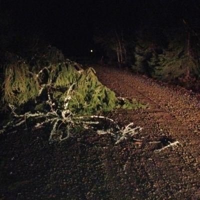 Puu kaatunut soratielle