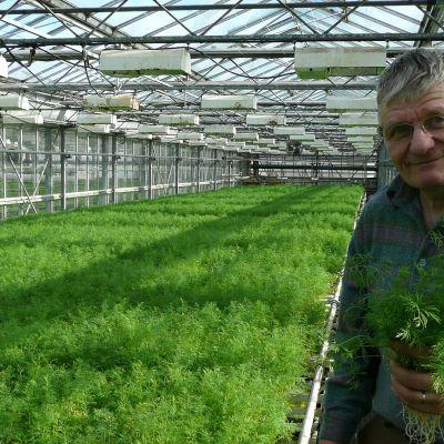 Timo Oksanen Virolan puutarhan kasvihuoneella tillinippu kädessään