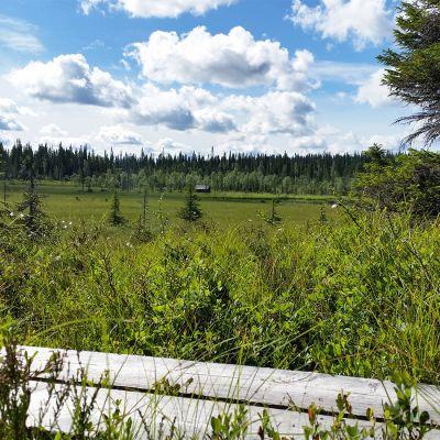 Suomaisema ja pitkspuut Syötteen kansalllspuistossa