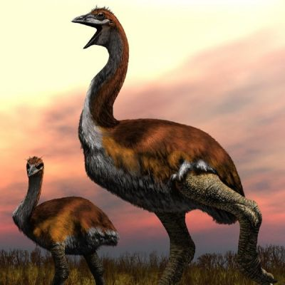 Pitkäkaulainen ja -jalkainen lintu ja sen poikanen ruohikossa.