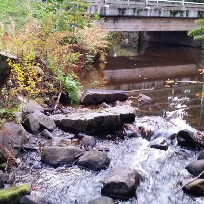 Puro ja silta
