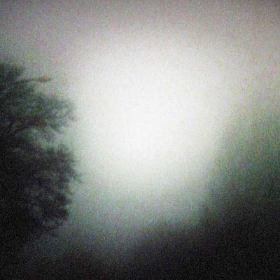 puiden latvoja sumussa