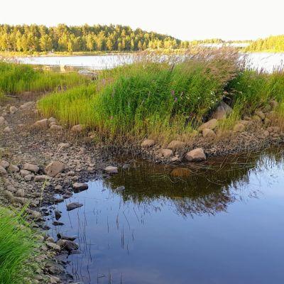 Iijoen kuivuus näkyy etenkin voimaloiden alapuolella, jossa myös meriveden korkeus vaikuttaa joen vedenkorkeuteen.