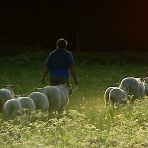 telä-Ruotsissa Blekingessä asuu väkeä, joka uskoo pienviljelyyn ja vannoo lähiruuan nimeen.