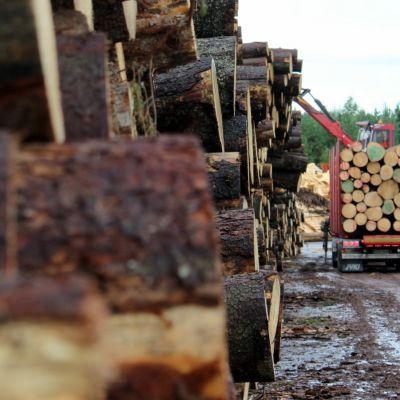 Tukkipuuta Metsä Woodin Punkaharjun tehtaan tukkipihalla.