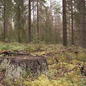 Metsää Keski-Suomessa