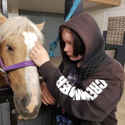 Vansku-poni hevonen poni