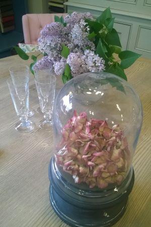 En glasklocka med torkade hortensior i rosa.