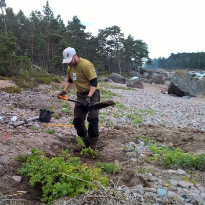 Iiris Kallajoki ja Asko Jääskeläinen osallistuivat kurtturuusun raivaustalkoisiin
