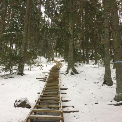 Den branta trappan som leder upp för berget in i skogen.