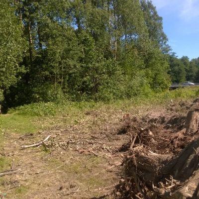 Ett område där skog har avverkats.