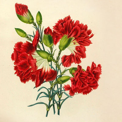 Blommor på gratulationskort.