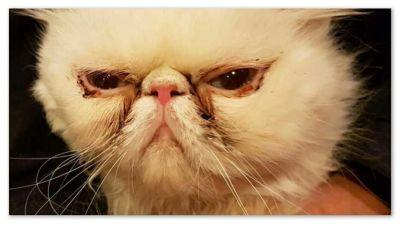 Rekku Resques bild, en katt med svår ögoninflammation.