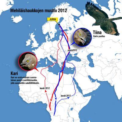 Mehiläishaukkojen Karin ja Tiinan reittivalinnat Suomen ja Keski-Afrikan välillä keväällä ja syksyllä 2012.
