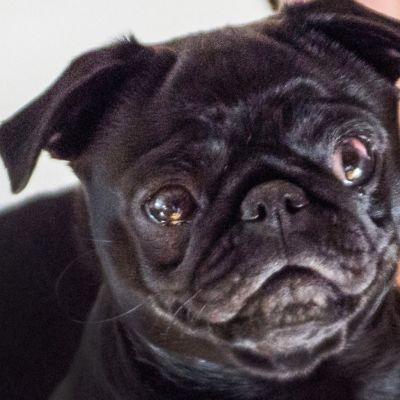 Edda-koiran ja sen omistajien kohtalo on aiheuttanut kiukkua.