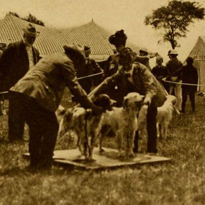 Koiranäyttely 1900-luvun alussa.