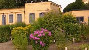 linnés trädgård, uppsala, 2001