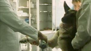 Schäfer hos veterinären, 1984