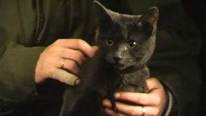 Katt, 1984