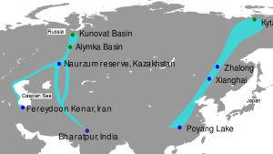 Aasian karttaan kuvattu lumikurjen levinneisyys