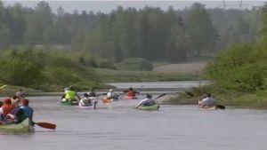 En grupp med kanoter paddlar i