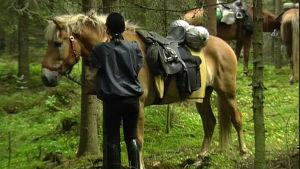 Häst i skog, Yle 1993