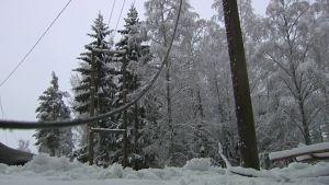 Tung blöt snö har böjt träden över elledningarna
