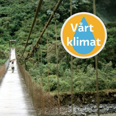 Många företag lovar plantera ett träd i till exempel den här regnskogen i Ecuador om du köper just deras produkt.