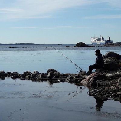 Kalastaja onkii siikaa Turun Ruissalossa.