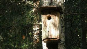 Vanha linnunpönttö