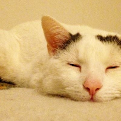 Kissa nukkuu peitolla.