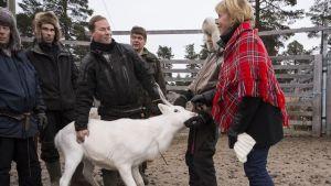 Justitieminister Anna-Maja Henriksson tar emot en ren som hon fått i gåva av ett renbeteslag