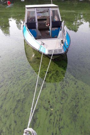 Båt och blågröna alger