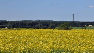 åkermark i södra Finland