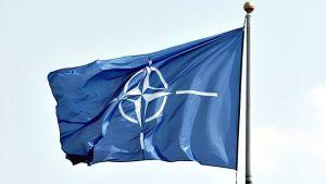 Natoflagga