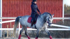 Hevonen ja kouluratsastaja talvella