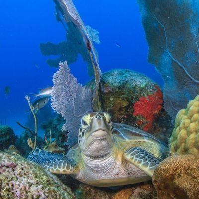 Marjo Aho, undervattensfotograf