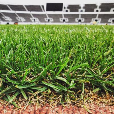 Olympiastadionin nurmikkoa.