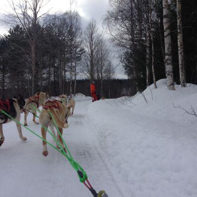 Juha Romppasen koiravaljakot