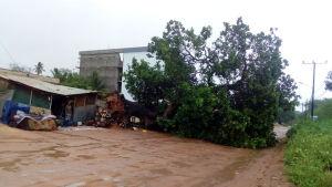Tusentals hus har förstörts av stormvindar och fallande träd